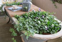 Garden / Garden ideas, pots, plants etc