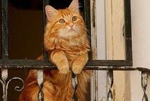 Cat Cat Cat!