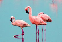 FLAMINGO. / This is love ❤