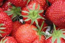 De eetbare tuin (superfoods)