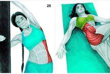 egzersiz ve kaslar