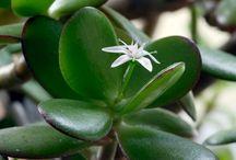 pozytywne rośliny
