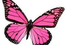 clipart butterflies