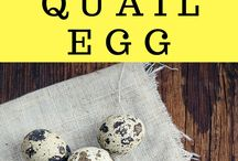 Quail / Quail can be a great addition to your livestock and property! Quail eggs. Quail meat. Raising quail.