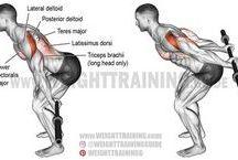 fitko chrbát