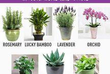 plants - flowers