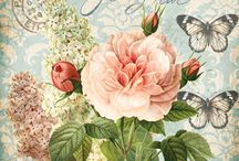 rose jardin as 2018 images
