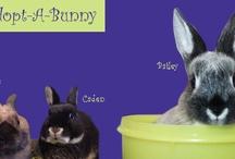 Rescue Rabbits For Adoption