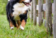 cute Dogi