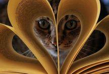 Il piacere della vita: lettura
