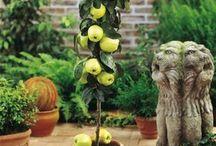 árvores cultivadas em  vasos:biosfitos