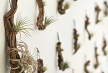 wanna create: Plants