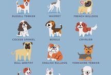 Από που κατάγεται ο σκύλος μας.....; / Η Lili Chin μεσω αυτών των posters μας δείχνει από που κατάγονται οι περισσότερες ράτσες σκύλων. Ο δικός σας σκύλος από που κατάγεται; Γνωρίζετε; Αν όχι δείτε παρακάτω......: :-)