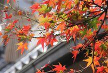NEW! ZENBU AKI Tour (Autumn/Fall 2015)