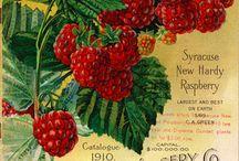 Винтажные ягоды и фрукты