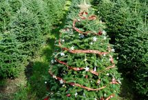 Tag-Your-own Tree / During the fall you can tag your own tree. Here at the Rocks Christmas Tree Farm you can tag your own tree with a difference. Customers decorate their trees in the field.