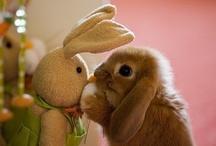bunnies / by Cattymoomoos