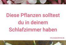Pflanzen Hilfe