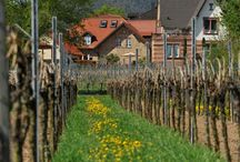 Erstklassig... / Unsere sonnenverwöhnten Lagen befinden sich mit insgesamt 30 Hektar in Maikammer, Gimmeldingen und auf der Haardt.
