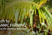 Organic Farming @ Chukki Mane / Organic Farming @ Chukki Mane
