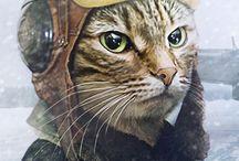 Cats dlya Jeni