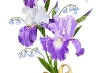 Цветы-цветочные - ирисы / категория цветы