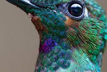 Colibries / Hermosos colibries posando para la cámara