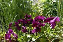 Annuals / A selection of annuals put asidefor our garden / by Christine Sinclair