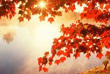 fall ( herfst)