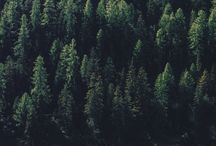 Forest · Bosques