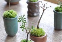 Petit jardine