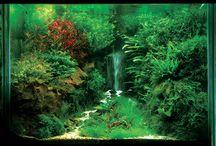 Aquascaping / Aquascaping: Adopt the pace of nature: her secret is patience.  http://aquaa3.com.br/category/aquapaisagismo