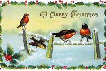Pintarroxo, o pássaro do Cartão de Natal por excelência!