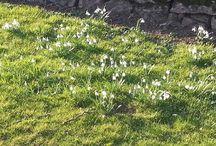 Spring - Ashbourne Holiday Cottages