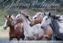 Galloping to Freedom / Galloping to Freedom: Saving the Adobe Town Appaloosas is the new book by Carol Walker following the story of the Adobe Appys rounded up by the BLM then reunited at Black Hills Wild Horse Sanctuary