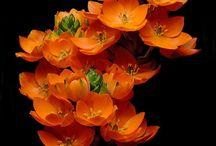Blomster og vækster / Smukke blomster