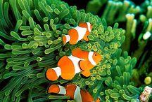 okyanus canlıları