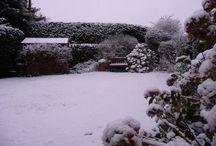 Our beautiful garden at No 31 / Our garden