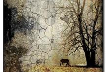 Encaustic / by Pat Beaumont