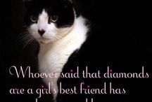 Meshah: My first feline love!❤