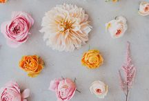 Florals / A board for all things beautiful and flowery!  / by Joe Browns