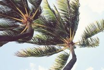 PALM TREES & COCONUTS