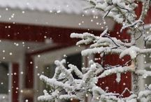 Winter Wonder Land / Snowy scenes