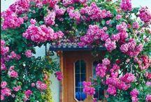 Lovely Scenery