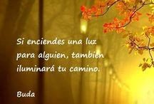 Buddha ✨