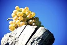 Wine Websites