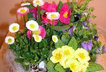 vázy,květnáče
