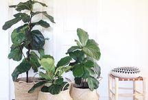 Lounge room plants