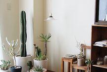 cactus/suculentas S2