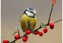 Inspirations : oiseaux